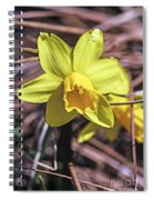 Yellow Glory Spiral Notebook