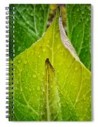 Yellow Green Skunk Cabbage Square Spiral Notebook