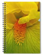 Yellow Iris Beard Spiral Notebook