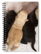 Yellow Labrador Suckling Puppies Spiral Notebook