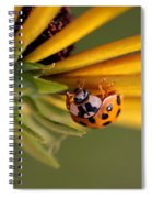 Yellow Lady - 3 Spiral Notebook