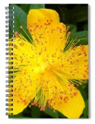 Yellow Lady Pins Spiral Notebook