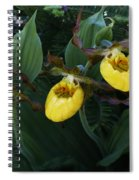 Yellow Lady Slippers On Forest Floor Spiral Notebook