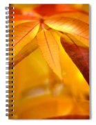 Yellow Leaves At Dawn Spiral Notebook