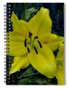 Yellow Lillies Spiral Notebook