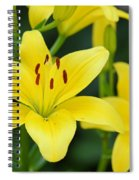 Yellow Lilly 8107 Spiral Notebook