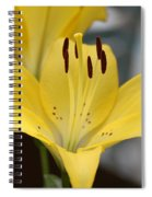 Yellow Lilly Spiral Notebook