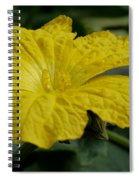 Yellow Luffa Blossom Spiral Notebook