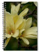 Yellow Magnolia Spiral Notebook