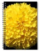 Yellow Marigold Spiral Notebook