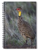Yellow-necked Francolin... Spiral Notebook