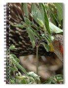 Yellow-necked Spurfowl Spiral Notebook