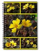 Yellow Oxalis - Oxalis Spiralis Vulcanicola Spiral Notebook