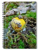 Yellow Patches Baby Mushroom - Amanita Muscaria Spiral Notebook