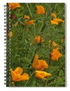 Yellow Poppies Dsc07460 Spiral Notebook