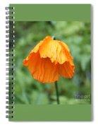 Yellow Poppy - Morning Dew Spiral Notebook