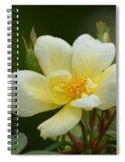 Yellow Rose 2013a Spiral Notebook