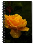 Yellow Rose Dapples With Waterdfrops Spiral Notebook