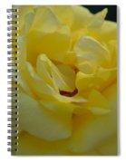 Yellow Rose Frills Spiral Notebook