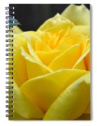 Yellow Rose Ll Spiral Notebook