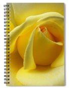 Yellow Rose Softness Spiral Notebook
