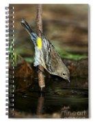 Yellow-rumped Warbler Drinking Spiral Notebook
