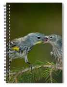 Yellow-rumped Warbler Feeding Young Spiral Notebook