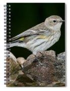 Yellow-rumped Warbler Hen Spiral Notebook