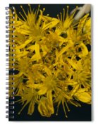 Yellow Sedum Spiral Notebook