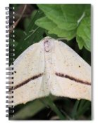 Yellow Slant-line Moth Spiral Notebook