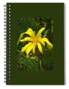 Yellow Spider Lily 21 Spiral Notebook