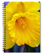 Yellow Spring Daffodil Spiral Notebook