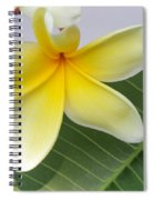 Yellow Star Plumeria Spiral Notebook