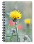 Yellow Star-thistle Spiral Notebook