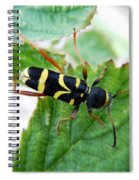 Yellow Stripped Beetle Spiral Notebook