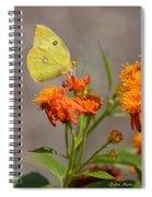 Yellow Sulphur Butterfly Spiral Notebook