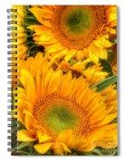 Yellow Sun Flower Burst Spiral Notebook