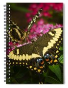 Yellow Swallowtail Butterflies  Spiral Notebook