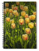 Yellow Tulip Flowers On Windmill Island In Holland Michigan Spiral Notebook