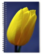 Yellow Tulip On Blue Background Spiral Notebook