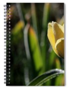 Yellow Tulip With Dew Spiral Notebook