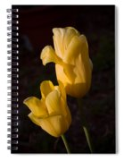 Yellow Tulips Last Rays Spiral Notebook