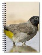Yellow-vented Bulbul Pycnonotus Xanthopygos Spiral Notebook