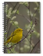 Yellow Warbler -1 Spiral Notebook