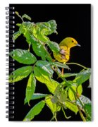 Yellow Warbler Spiral Notebook