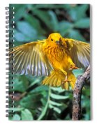 Yellow Warbler Dendroica Petechia Spiral Notebook