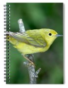 Yellow Warbler Dendroica Petechia Female Spiral Notebook