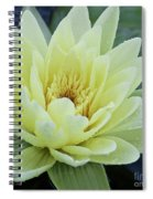 Yellow Water Lily Nymphaea Spiral Notebook