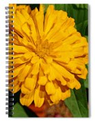Yellow Zinnia Spiral Notebook