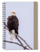 Yellowstone Bald Eagle Spiral Notebook
